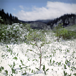 Snow In Summer Mountains Royalty Free Stock Photo - Image: 6413435