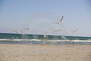 Seagulls Royalty Free Stock Photos - Image: 6415368