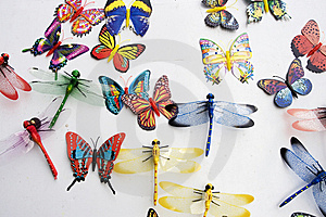 Insects Collection Royalty Free Stock Image - Image: 6419986