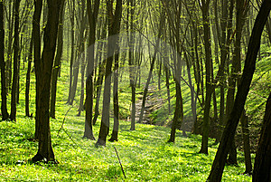 Forest Royalty Free Stock Image - Image: 6421726