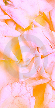 Rose Petal Background Stock Photos - Image: 6428233