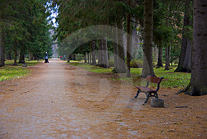 Park Lane In Autumn Royalty Free Stock Photo - Image: 6433405