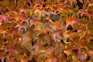 Autumnal Leafage Stock Photography - Image: 6433592
