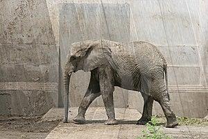African Elephant Royalty Free Stock Photos - Image: 6435048