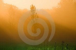 Mystical Morning Royalty Free Stock Photo - Image: 6447585