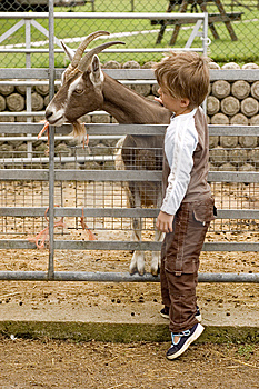 Boy And Goat Royalty Free Stock Images - Image: 6472599