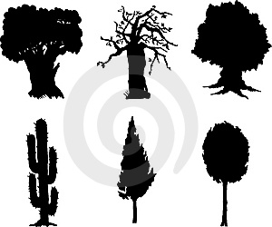 Set Isolated Trees - 12 Stock Photography - Image: 6482932