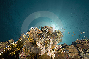 Coral And Fish Royalty Free Stock Photography - Image: 6484427