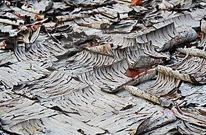 Peeling Tile Background Stock Images - Image: 6487144