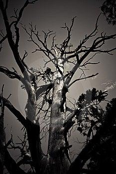 Tree Stock Photography - Image: 6491962