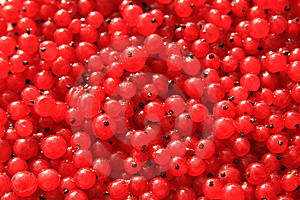 Currants Stock Images - Image: 6497264