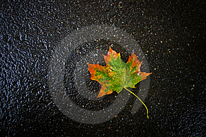 Autumn Leaf On Asphalt Stock Photos - Image: 6498643