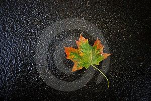 Autumn Leaf On Asphalt Stock Photos - Image: 6498643