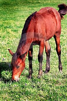 Horse Eating Stock Image - Image: 6500821