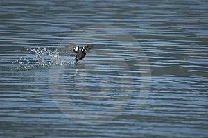 птица Стоковая Фотография RF - изображение: 6504157