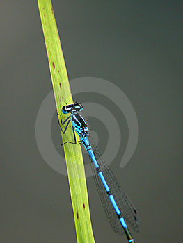 Dragonfly Sitting On A Blade. Stock Photos - Image: 6505243