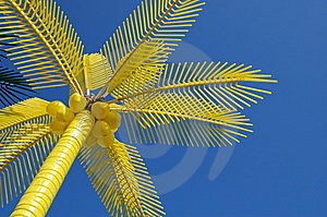 Colorful Palm On Beach Stock Images - Image: 6506564