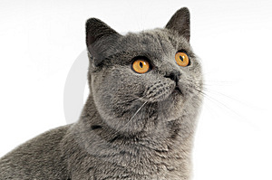 Dark Gray Cat Stock Photos - Image: 6509203