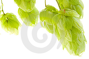 Hop Stock Images - Image: 6511424