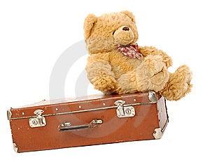 Orso & valigia Immagini Stock