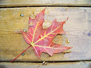 Red Leave Royalty Free Stock Photos - Image: 6521968