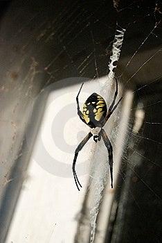 Writing Spider In Old Doorway Stock Image - Image: 6523691