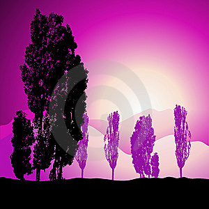 Tree Silhouette, Landscape Royalty Free Stock Images - Image: 6527699
