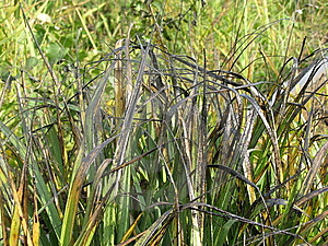 Grass All In Black Oil Stock Images - Image: 6528614