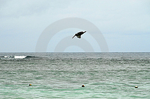 Heron Dive Royalty Free Stock Photo - Image: 6535245