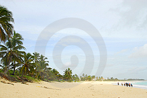 Ride On Horseback Along The Beach Stock Photography - Image: 6535282