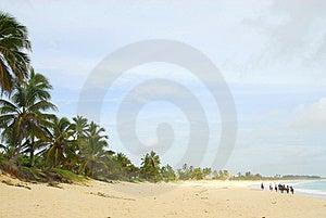 Ride On Horseback Along The Beach Stock Photography - Image: 6535282