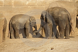 Indian Elephants Royalty Free Stock Photo - Image: 6538985
