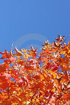 Autumn leaves Free Stock Images