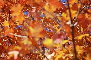 Beautifall foglie di autunno, in un luminoso giorno di autunno, messa a fuoco selettiva.