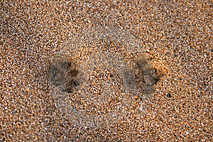 Fox Tracks Stock Photos - Image: 6546123