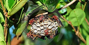 Wasps Royalty Free Stock Image - Image: 6546306