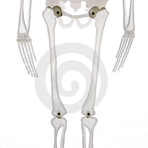 Middle Part Of Skeleton Isolated Stock Photos - Image: 6552013