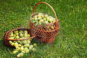 Rich Harvest Stock Photos - Image: 6552713