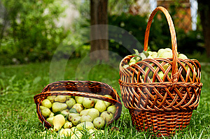 Rich Harvest Royalty Free Stock Images - Image: 6552719