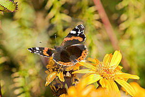 Beauty Butterfly Royalty Free Stock Images - Image: 6553009