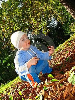 Jogo Do Rapaz Pequeno Fotos de Stock - Imagem: 6555633