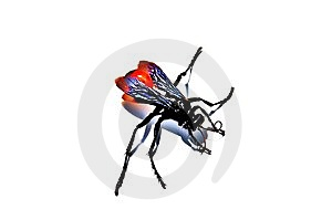 Wasp Royalty Free Stock Images - Image: 6566029
