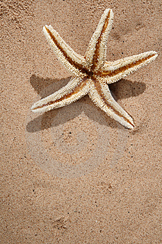 Starfish On A Beach Sand Royalty Free Stock Images - Image: 6568489