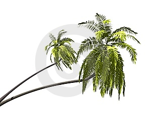Palmtree Royalty Free Stock Images - Image: 6575089