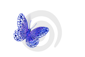 Blue Butterfly Stock Photo - Image: 6580770