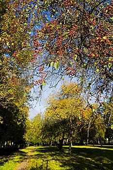 Autumn Park Royalty Free Stock Photos - Image: 6584528