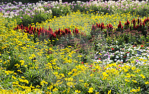 Flower Land Royalty Free Stock Photos - Image: 6587858