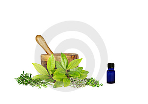 Medicinal and Culinary Herbs Royalty Free Stock Image
