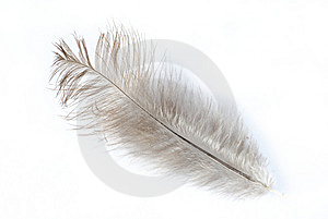 Feather Stock Photo - Image: 6595920