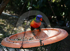 Parrot Feeding Stock Photos - Image: 665363